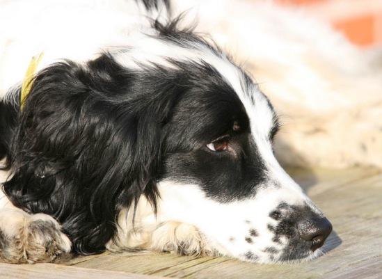Собачий портрет - Страница 6 114108--26111604-m549x500