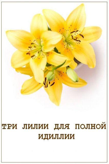 http://data10.gallery.ru/albums/gallery/211527-74b2a-27685387-.jpg