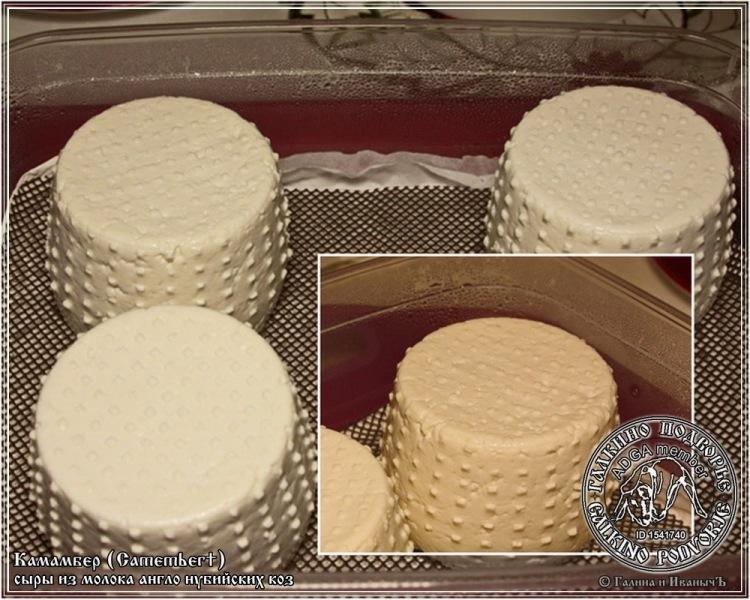 Сыр Камамбер из козьего молока